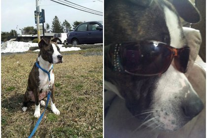 El perro de nombre Amigo, de siete años, se encuentra en un albergue de protección animal en cuarentena, la familia aseguró que nunca antes fue agresivo Foto: (Facebook)