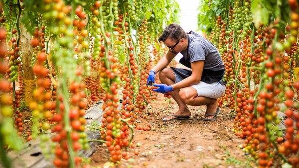 El 72% de los productores agropecuarios pretenden realizar inversiones, siendo 9 de cada 10 grandes y mega productores