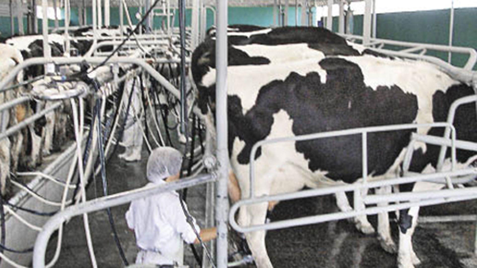 La lechería sigue en nivele de crisis.