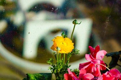 Las marimonias necesitan protección del sol (Shutterstock)