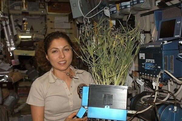 Ansari sostiene una planta cultivada en el Módulo de Servicio Zvezda de la Estación Espacial Internacional. Foto cortesía de la NASA.