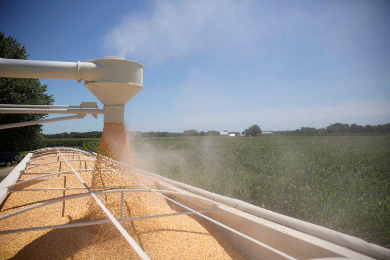 Si se aprueba la nueva ley, el límite de bioetanol de maíz en la nafta podría reucirse al 3 por ciento (REUTERS/Daniel Acker)