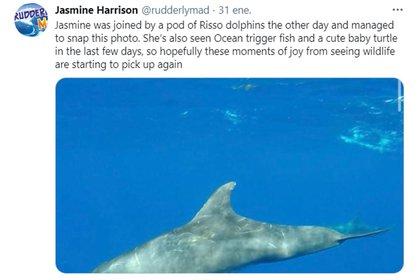 Harrison se encontró con distintas especies marinas durante su travesía (@ACampaigns)