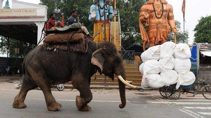 Los elefantes son comunes, hasta ahora, en las calles de Nueva Delhi (AFP)