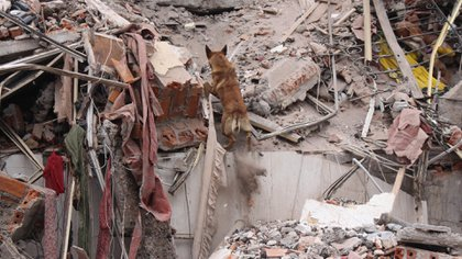 Uno de los perros de ACECC trabajando en el terremoto de México en 2017 (ACECC)