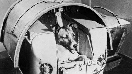 Laika, el primer ser vivo terrestre en viajar al espacio (AFP)