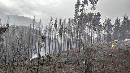 Fotografía cedida por el Gobierno de Chubut que muestra los incendios forestales que afectan la provincia. EFE/Gobierno de Chubut