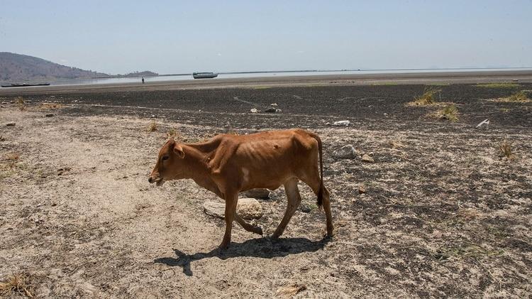 Los científicos estiman en cerca de 8 millones el número de especies animales y vegetales en el planeta. Pero sólo una ínfima parte de ellas son evaluadas (Photo by AMOS GUMULIRA / AFP)