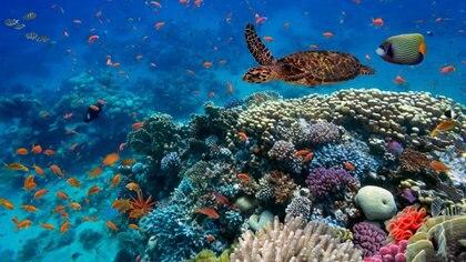Los humanos no pueden ni compararse con la extensión de vida de algunas especies (Getty)