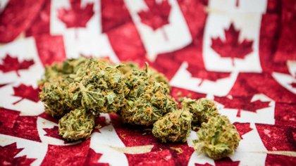 Desde hace algún tiempo desde el senado de Canadá se viene allanando el camino para la legalización de la marihuana y el uso recreativo de algunas drogas
