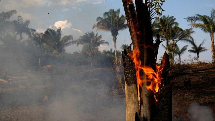 Resultado de imagen para arde amazona