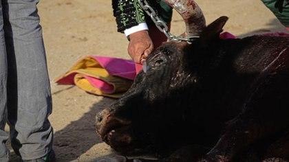 La tauromaquia es una de las actividades más repudiadas en el mundo y que dividen a España.