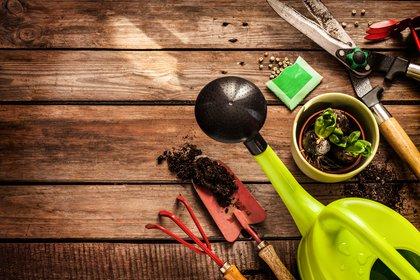 Se dictan cursos de cactus y suculentas, las plantas que se imponen esta temporada, para adquirir conocimientos básicos necesarios para su cuidado y cultivo (Getty Images)