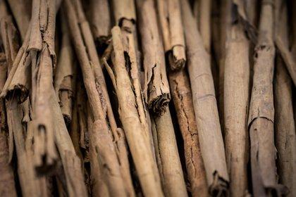 La canela se utiliza en las terapias de reconocimiento de olores