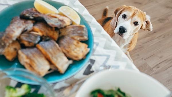 Es muy importante para las mascotas la alimentación para lograr el bienestar saludable (Getty Images)