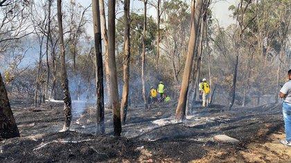 Un impresionante incendio consumió parte del bosque de Chapultepec Tercera Sección