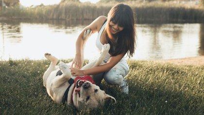 Mediante un exhaustivo análisis del comportamiento y el ADN de varias razas de perros se determinó cuáles son los más sociables (Shutterstock)