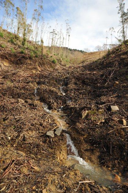 Plantación de eucaliptos. Group of Stream Ecology/UPV/EHU, Author provided