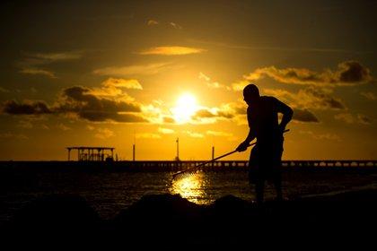 Un empleado de un hotel recoge sargazo en la orilla de la playa (Foto: EFE)