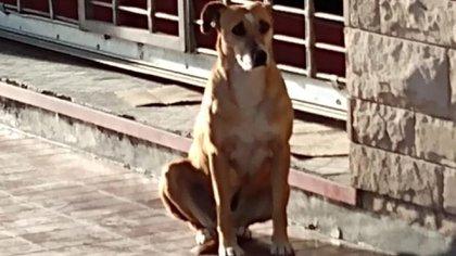 Tristeza: la perrita Bianca, a quien Eugenia adoptó hace muchos años, la sigue esperando.  @NIrrutia