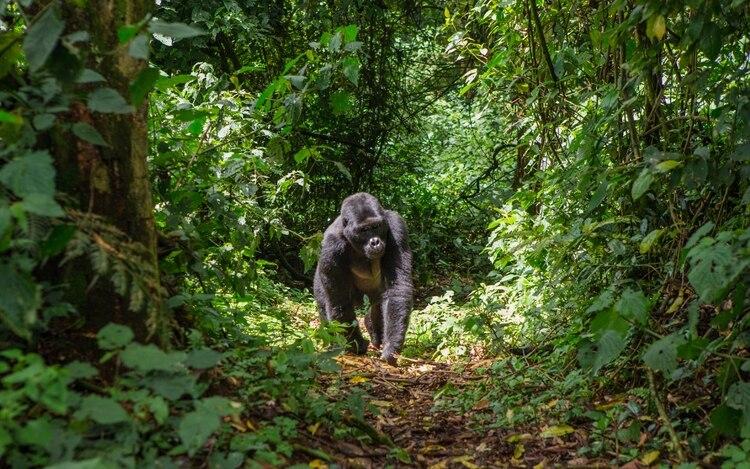Los científicos estudiaron 135,625 árboles en 244 parcelas africanas en 11 países con datos que, en algunos casos, se remontan a la década de 1960 (Shuterstock)