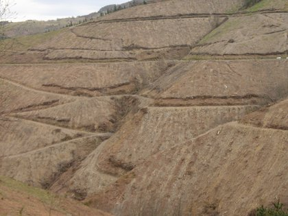 Paisaje tras una tala a matarrasa en el País Vasco. Group of Stream Ecology/UPV/EHU