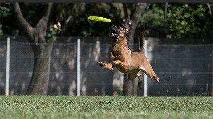 El domingo serealizó la clasificatoria en Disc Dog para el mundial 2018 que se llevará a cabo en septiembre en Tennesse Estados Unidos. (Segismundo Trivero)