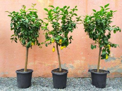 Durante el invierno se pueden plantar arbustos de hoja caducas y árboles