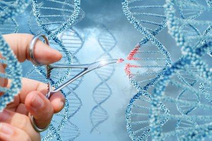 Científicos lograron modificar genes defectuosos en humanos - Infobae