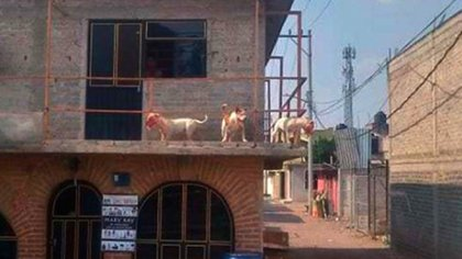 En la vivienda residían familiares de las víctimas, quienes eran los dueños de los animales (Foto: adn 40)