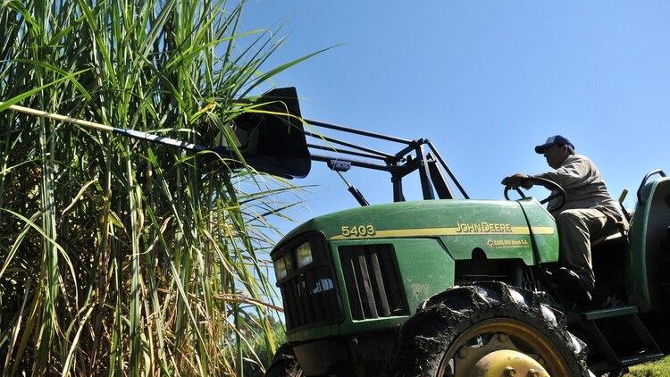 El consumo de azúcar y aceite vegetal exhibe un crecimiento del 18% en el consumo calórico de la región