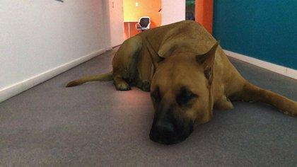 """""""Sasha dog"""", el perro que se volvió viral en las redes sociales"""