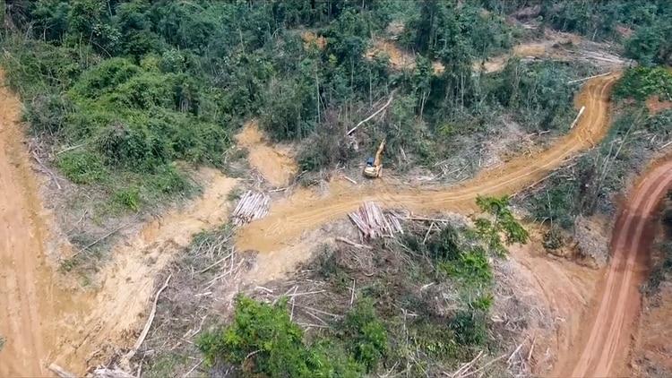 La deforestación y consiguiente destrucción de ecosistemas es una de las consecuencias más graves de la expansión de China por el mundo, que potencia actividades económicas extractivas y las redes de transporta para exportar los productos