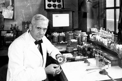 El hongo Penicillium, que contaminó las placas donde trabajaba Alexander Fleming, sirvió para desarrollar la penicilina