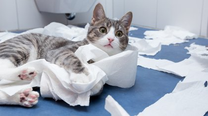Los animales siempre tienen su propia personalidad y los conflictos pueden surgir cuando de actitudes del hogar se trata (iStock)