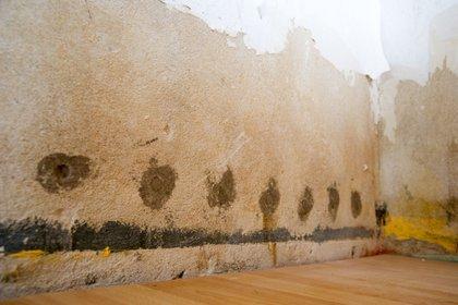 ARCHIVO - Es aconsejable revisar periódicamente si no se produjeron manchas oscuras o decoloraciones en alguna pared o en el cielorraso, ya que podrían indicar que existe una pérdida de agua. Foto: Andrea Warnecke/dpa