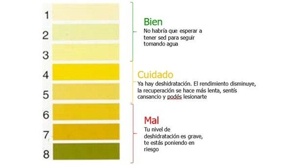 Tabla orientativa del estado de hidratación según el color de la orina