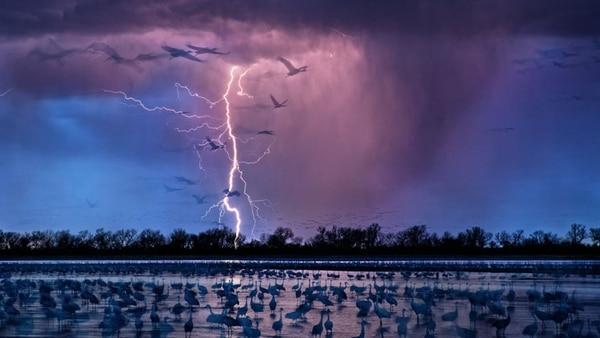 Nebraska, Río Wood, 2016. Una tormenta de rayos no amedrenta a las aves que allí descansan. La imagen fue tomada por Randy Olson (National Geographic)