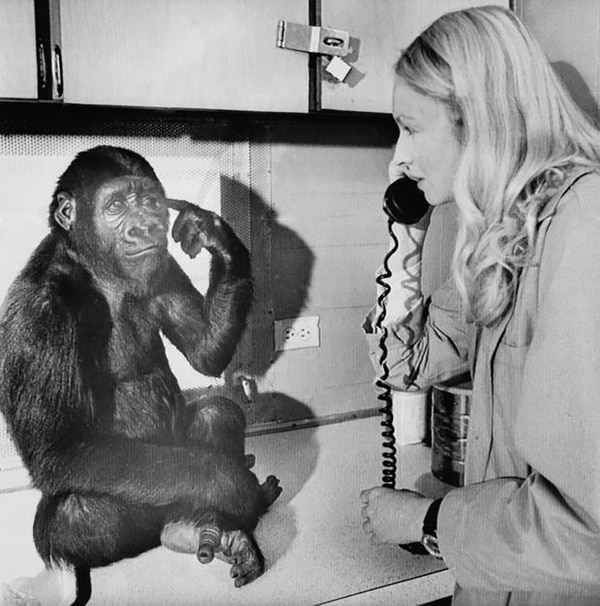 La psicóloga animal fue quien le enseñó lenguaje de señas