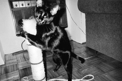 """""""La temeraria historia de un felino o cómo aprendí sobre la vida y el amor con un maravilloso gato ciego""""."""