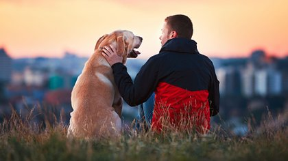 El vínculo entre los humanos y las mascotas es tan notorio como con un miembro de la familia