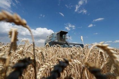 Una encuesta de la Universidad Austral reflejó la preocupación de los productores por su situación financiera y la falta de precipitaciones (Reuters)