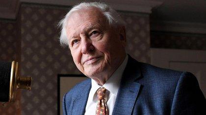 El divulgador naturalista británico Sir David Attenborough (Shutterstock)