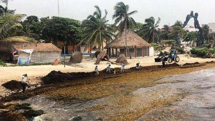 Playa Fundadores, en Playa del Carmen, este 24 de junio de 2020 (Foto: Facebook Observatorio Ciudadano Sargazo)