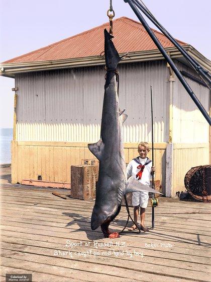 Un niño posa junto a un ejemplar de tiburón de casi tres metros en Russell, Nueva Zelanda, en 1915
