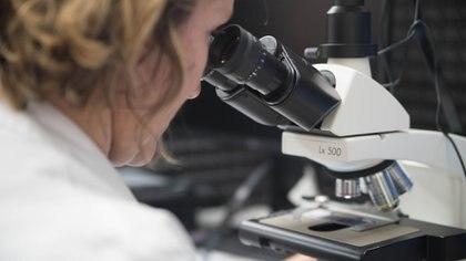 Al analizar la respuesta del sistema inmunitario adaptativo, un estudio fundamental demostró niveles altos de activación de células B extrafoliculares entre pacientes con COVID-19 grave
