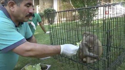 Veterinarios notaron diferencias físicas (Foto: Captura de pantalla Hispanatolia TV)