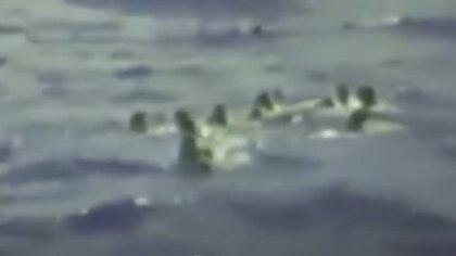 Los hombres se pusieron en círculo para enfrentar a los tiburones que los atacaban (Captura video Reuters)