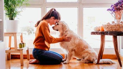 Las caricias en el bajo vientre y las zonas inferiores se deben dar a perros cuando no hay duda de quién es el dominador y quién el dominado (Shutterstock)