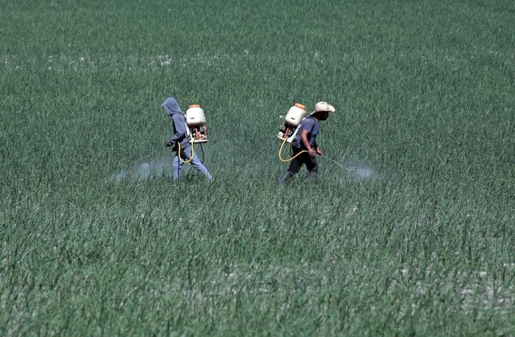 Trabajadores del campo han registrado distintas enfermedades relacionadas con los químicos (Foto: Cuartoscuro)